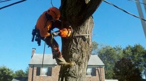 Tree Trimming 2