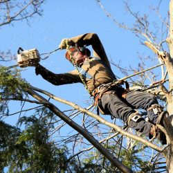 Tree Removal Hampton Roads VA