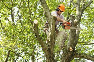 Tree Trimming 1