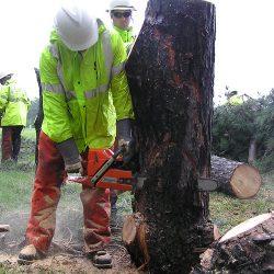 58800e5fbba6 Technical Felling – Tree Service Hampton Roads-Simmons Tree Care